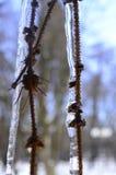 Gałąź drzewo w lodzie fotografia stock