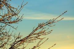 Gałąź drzewo w lodzie Obrazy Stock