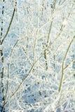 Gałąź drzewo w przedstawieniu Obraz Stock