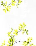 Gałąź drzewo z żółtej zieleni liśćmi Obrazy Stock