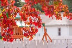 Gałąź drzewo z jaskrawy czerwonymi jesień liśćmi i białym ogrodzeniem blisko wygodnego małego domu Pogodny jesień dzień w jardzie zdjęcie royalty free