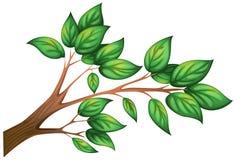 Gałąź drzewo z liśćmi ilustracja wektor
