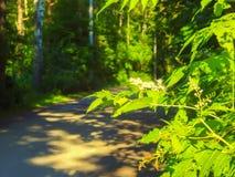 Gałąź drzewo z zamazaną lasową ścieżką w tle obraz royalty free