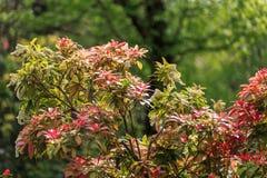 Gałąź i cienieją liście po środku parka Obraz Stock