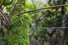 Gałąź i drut kolczasty zdjęcie royalty free