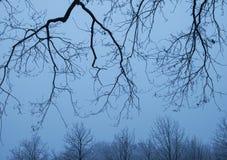 Gałąź i drzewa Zdjęcie Stock