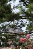 Gałąź i menchia kwitną przed Chińską pagodą zdjęcie stock