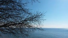 Gałąź i morze Zdjęcie Stock