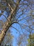Gałąź i motyle zdjęcie royalty free