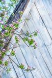Gałąź jabłoń z delikatnymi różowymi kwiatami Zdjęcia Royalty Free
