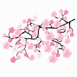 Gałąź Japońscy czereśniowi okwitnięcia również zwrócić corel ilustracji wektora Obraz Stock