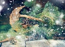 Gałąź Jedlinowego drzewa Błękitny Nieociosany Koszykowy Drewniany stół Zdjęcie Royalty Free