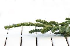 Gałąź jedlinowy drzewo na śnieżystym pokładzie Fotografia Stock