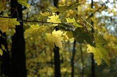 gałąź jesienią fotografia stock
