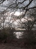 gałąź jesieni zimy sylwetki rolny pole jałowy zdjęcia stock