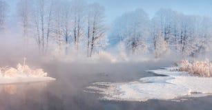 gałąź jodły śniegu drzewnego widok zima Zdjęcia Stock