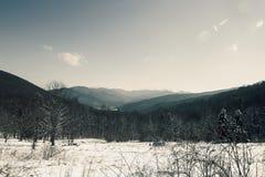 gałąź jodły śniegu drzewnego widok zima Zdjęcia Royalty Free