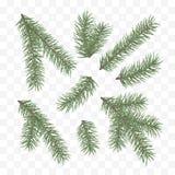 gałąź jodły zieleń Wakacyjny wystroju element Set choinki gałąź Conifer gałęziasty symbol boże narodzenia i nowy rok ilustracja wektor