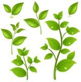 gałąź kolekci zieleni wektor ilustracja wektor