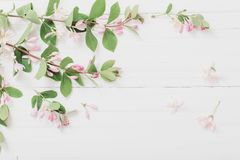 Gałąź krzak z różowymi kwiatami na drewnianym tle zdjęcia stock