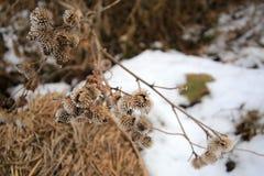 Gałąź kwiaty na tle biały śnieg obraz royalty free