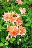 Gałąź kwiaty w japończyka ogródzie zdjęcia stock