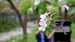 Gałąź kwitnąć jabłoni zakończenie w górę Piękno młoda kobieta cieszy się naturę w wiosna jabłczanym sadzie, Szczęśliwy Piękny zbiory wideo