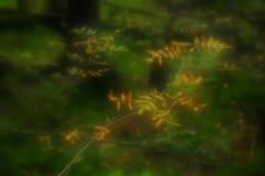 Gałąź las z jaskrawymi liśćmi obraz stock
