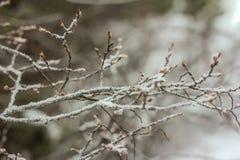 gałąź marznący drzewo Fotografia Stock