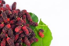 Gałąź morwowa owoc i morwa leaf na białego tła zdrowym morwowym owocowym jedzeniu odizolowywającym Obrazy Royalty Free