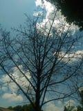 Gałąź na drzewie żadny liście Obraz Stock