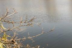 Gałąź nad rzeką, bezlistna gałąź Obraz Stock