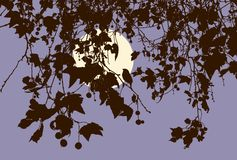 Gałąź owocowy drzewo w jesieni nocy Obrazy Royalty Free