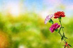 Gałąź piękny kwiatu goździk Zdjęcia Royalty Free