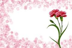 Gałąź piękny kwiatu goździk Obrazy Stock