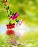 Gałąź piękny kwiatu goździk Obraz Stock