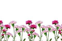 Gałąź piękny kwiatu goździk Fotografia Royalty Free