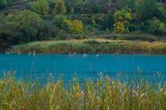 Gałąź pojawiać się od powierzchni jeziorny Tsivlos zdjęcia royalty free