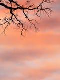Gałąź przeciw wschodu słońca niebu zdjęcie stock