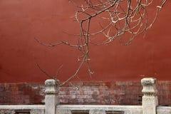 Gałąź przed czerwieni ścianą Obraz Stock