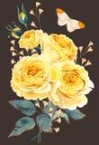 Gałąź róże Zdjęcia Royalty Free