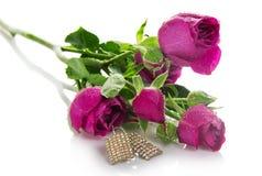 Gałąź róże z wodnymi kroplami Zdjęcie Royalty Free