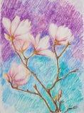 Gałąź różowa kwitnie magnolia Obrazy Royalty Free