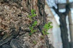 Gałąź r od barkentyny drzewo fotografia royalty free