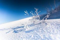 Gałąź roślina zakrywająca z śniegiem Zdjęcia Royalty Free