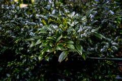 Gałąź rośliny Zdjęcia Stock