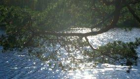 Gałąź sosny w promieniach słońce na tle jezioro zbiory wideo