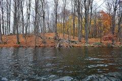 gałąź spadać target3172_1_ jezioro nad drzewem Obraz Royalty Free