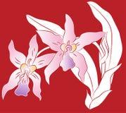 Gałąź storczykowy kwiat z zieleń liśćmi, Tapetuje rżniętą ilustrację Ilustracji