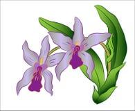 Gałąź storczykowy kwiat z zielonymi liśćmi, Wektorowa ilustracja Ilustracji
